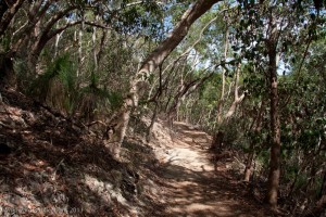 Dappled light on Hamilton Island's Scenic Trail